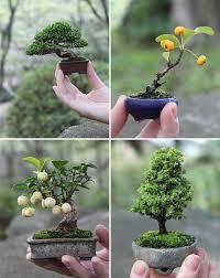 44-Growing Japanese Bonsai Trees for Bonsai Gardens